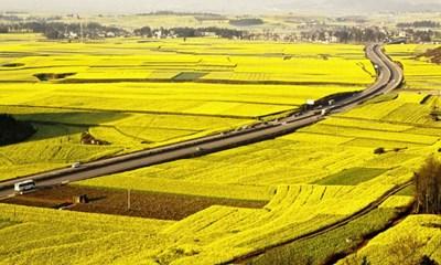 Hộ gia đình, cá nhân có được chuyển đổi quyền sử dụng đất nông nghiệp cho bất kỳ ai?
