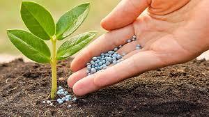 Mua giống cây trồng đã được bảo hộ để sản xuất có bị xử phạt không?