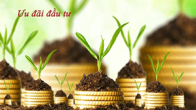 Có phải luôn được hưởng ưu đãi đầu tư ghi trên giấy chứng nhận đăng ký đầu tư?