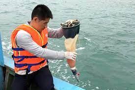Quan trắc chất lượng nước biển định kỳ được quy định ra sao?