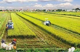 Có được miễn, giảm thuế sử dụng đất phi nông nghiệp tại 2 nơi không?