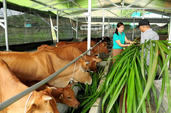 Biện pháp bảo vệ môi trường của cơ sở chăn nuôi gia súc, gia cầm được quy định như thế nào?