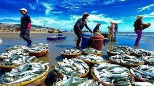 Đơn đề nghị cấp giấy phép khai thác thủy sản gửi đến cơ quan nào?
