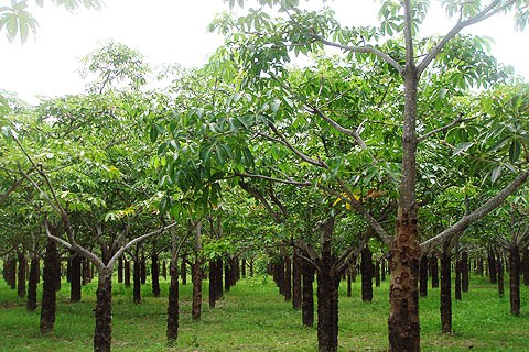 Giá đất của đất trồng cây lâu năm tại Kiên Giang là bao nhiêu?