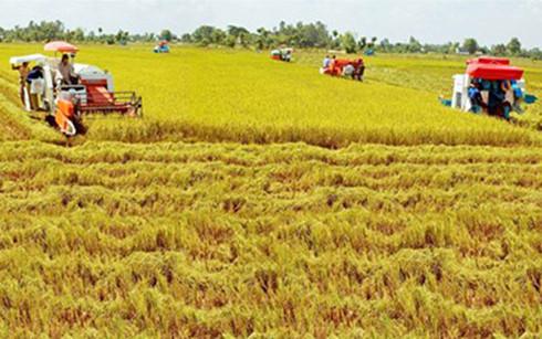 Người nhận khoán đất nông trường có được cấp sổ đỏ không?
