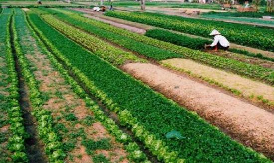 Đất nông nghiệp chỉ mới có quyết định giao đất mà chưa có sổ đỏ thì có được chuyển nhượng không?
