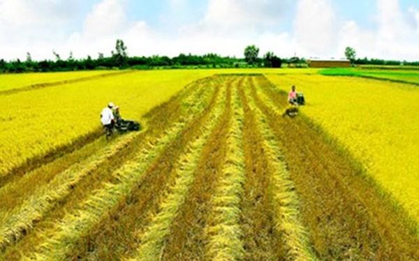 Hộ gia đình, cá nhân trực tiếp sản xuất nông nghiệp được giao đất không thu tiền sử dụng đất?