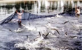 Thẩm quyền cấp phép nuôi trồng thủy sản trên biển trong phạm vi 2 hải lý