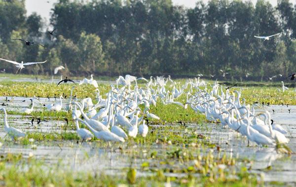 Trách nhiệm của người dân khi hoạt động trong khu bảo tồn đất ngập nước