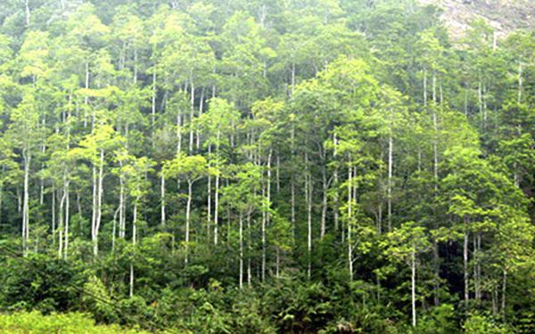 Xác định kế hoạch quản lý, bảo vệ, phát triển, sử dụng rừng và thương mại lâm sản đối với rừng sản xuất