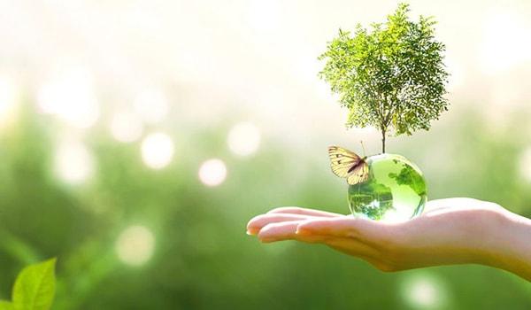 Trách nhiệm lập báo cáo hiện trạng môi trường được quy định thế nào?