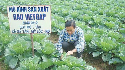 Tổ chức chứng nhận sản phẩm thủy sản, trồng trọt, chăn nuôi được sản xuất, sơ chế phù hợp với VietGAP là gì?