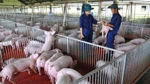 Hàng xóm chăn nuôi gây mùi hôi thối thì nên làm gì?