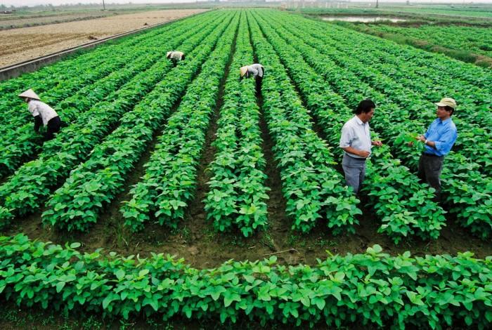 Tổ chức muốn sử dụng đất nông nghiệp có cần xin giấy chấp thuận không?