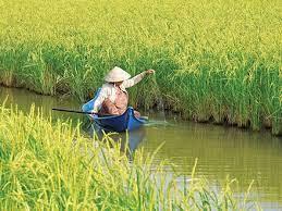 Đất trồng lúa chuyển sang nuôi tôm thì phải xin phép?