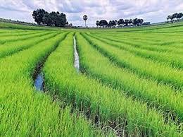 Nhóm ngành trồng cây hàng năm gồm những hoạt động kinh tế nào?
