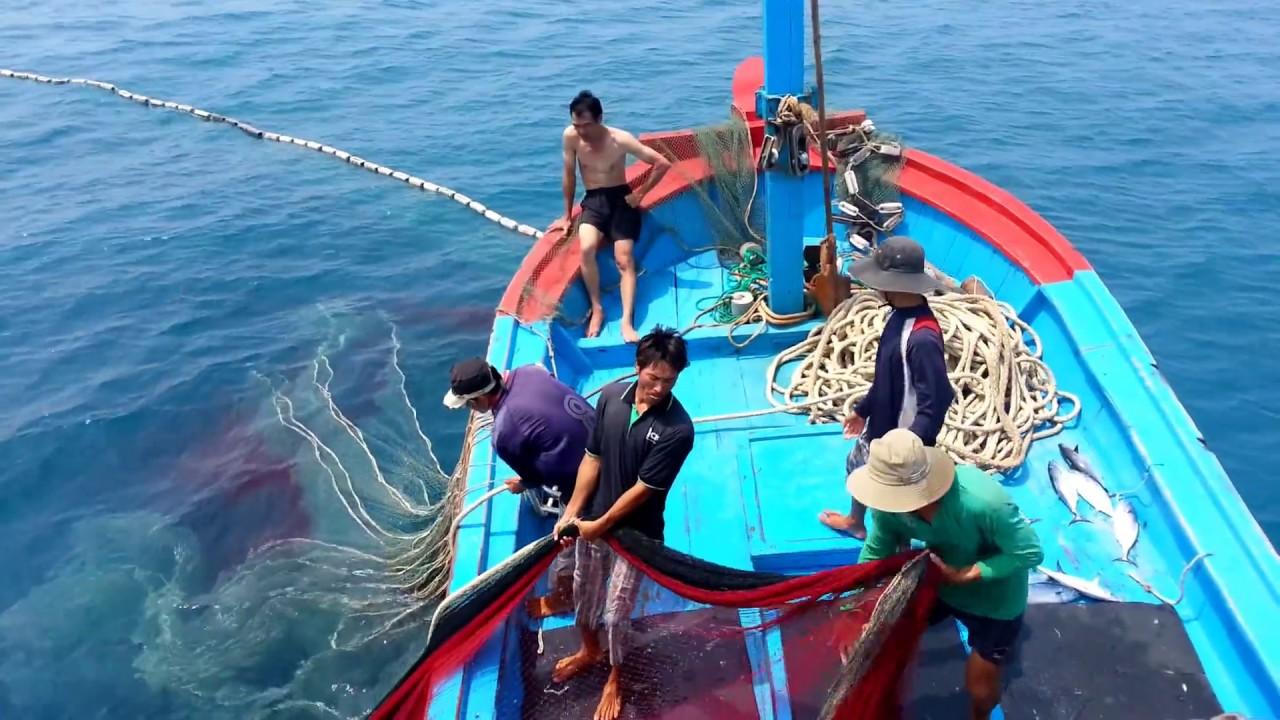 Thời gian nào thì được đánh bắt Cá Vền trong năm?