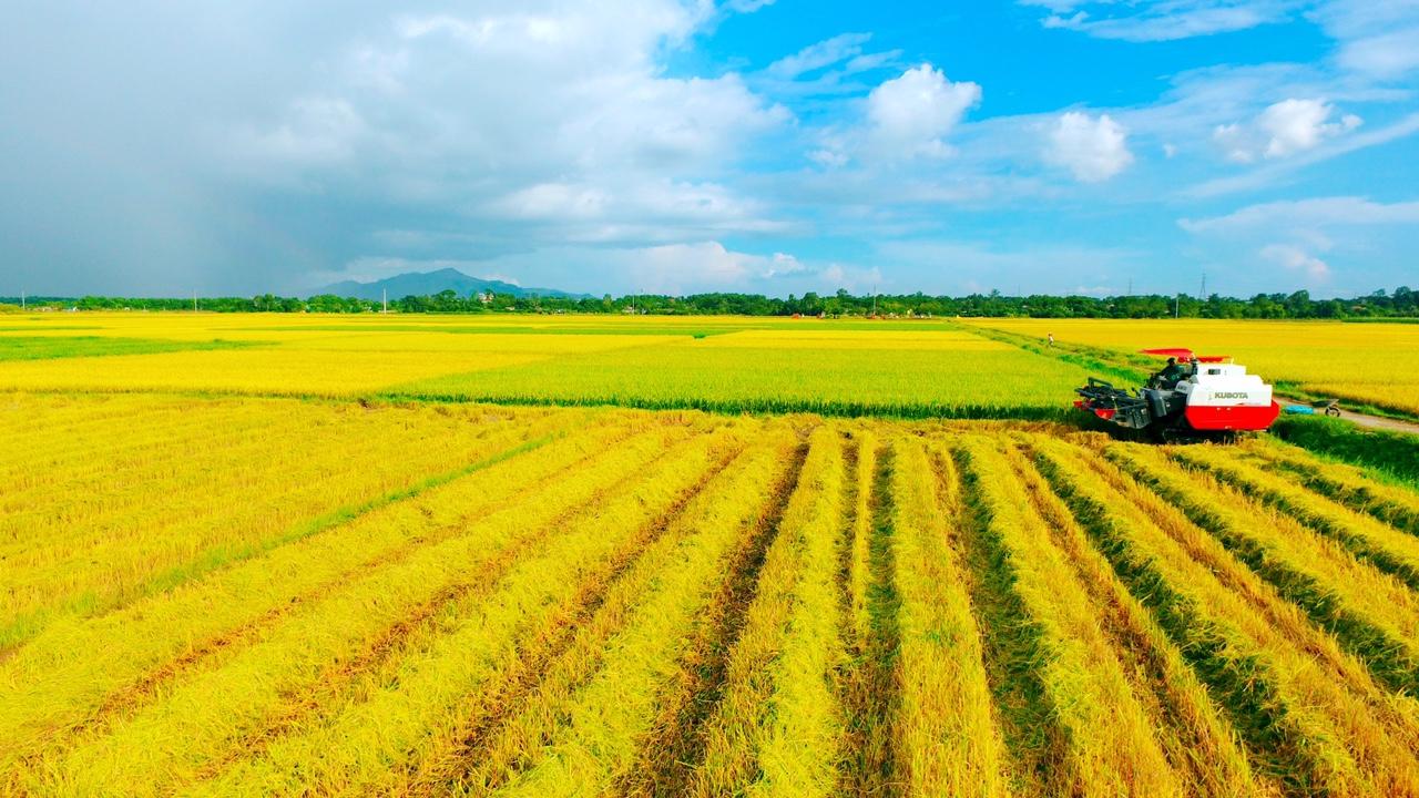 Hạn mức giao đất nông nghiệp được quy định như thế nào theo Luật đất đai 1993?