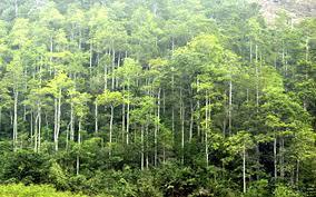 Điều tra tăng trưởng rừng