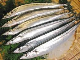 Mức phạt đối với hành vi khai thác trái phép 8 kg Cá Kim