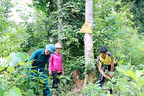 Hồ sơ thành lập khu rừng đặc dụng được quy định như thế nào?